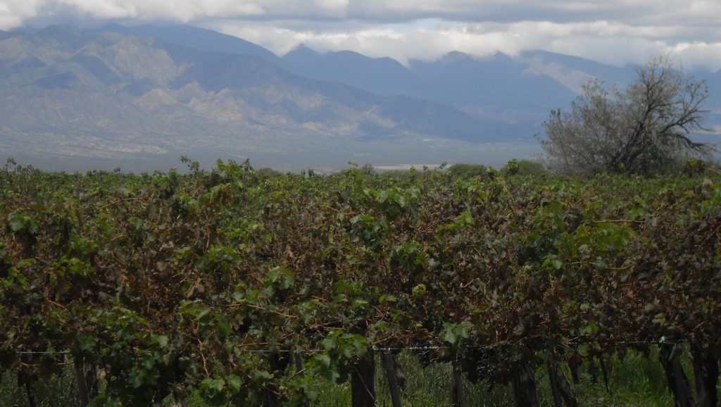 Fin de semana largo en Salta - Viñedos en Cafayate