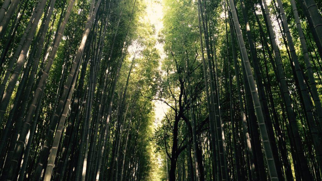 Bamboo park - Viajar a Japón