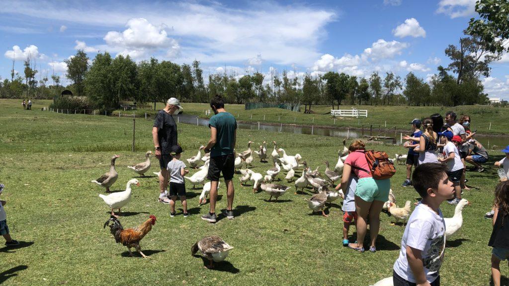 Pequeña Holanda dia de campo patos